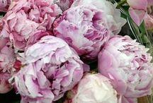 Flowers / by Pauleen Cass