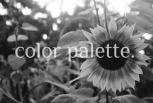 color palette / by Emily Pullen