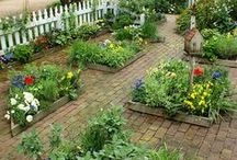 My Garden and Landscaping Ideas / by Yvonne
