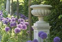 Garden / by Michelle Stuyck