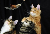 Kitty Kats / by Mary Jane Watson