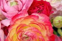 I love flowers! / by Marieke van den Akker