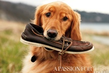 Men's Summer Shoes / by Cathie Moros