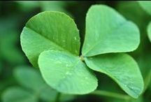 St Patrick's Day / by Susan Bambino
