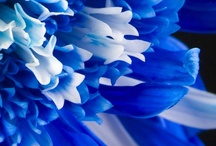 Color ~ Blues / by Susan Bambino