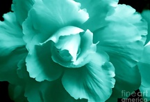 Color ~ Aqua, Teal, Tiffany &Turquoise  / by Susan Bambino