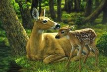 Animals ~ Darling Deers / by Susan Bambino