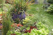 garden / by Nancy Swanson