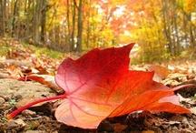 Fall....My Favorite! / by Brenda Skime