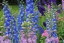 Gardens/Outdoors / by Cheryl Miller