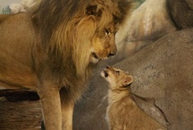 Animal Love--Mom & Dad Style   / Baby Animals with their Parents / by Sharon Thompson
