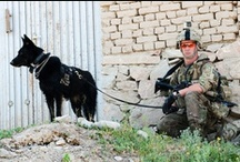 Military Dogs / by U.S. Central Command (CENTCOM)