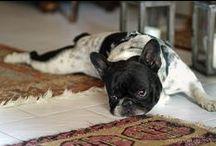 Love French Bulldogs / by Mari Crea