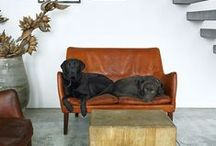 Dogs with Style / chuck is our shop dog. he is art.   / by Oak Hill Iron