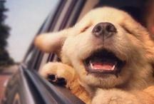 Happy...just happy. / by Tammi Johnson Legassey