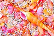 Craving Coral / by Tammi Johnson Legassey