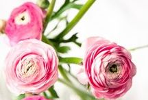 flowers / by Helen Charleston