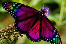 Butterflies, ladybugs and dragonflys / by Sherry Archibald
