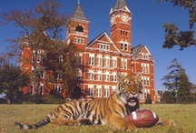 Toomer's Tigers / by Hibbett Sports®