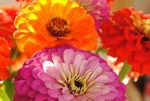 Flowers / by Sarah Jordan