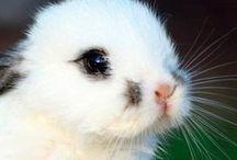 Bunny-Buns / Absolutely LOVE rabbits!!  / by Sarah Jordan