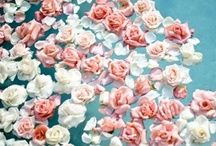 florals; / by amanda carmela;