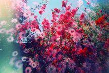 Pretty pictures / by Nicole Lavella