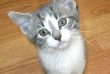 Cute Kittens / by DIY Weddings® Magazine