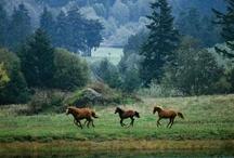 Horses / public / by Jennifer Miller