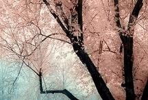 Blossoms <3 / by Suzie Bergman