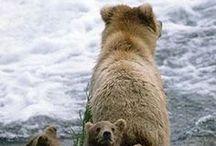 Alaska Inspires Us / by UAF Cooperative Extension Service