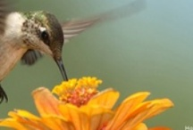 Gardening for Wildlife / by National Wildlife Federation