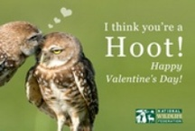 Valentine's Day / by National Wildlife Federation