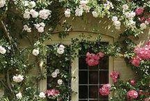 A Rose Garden / by Maggie McAllister