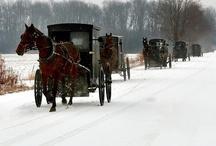 Amish / by Maritza Valentin