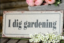 Gardening Tips / by Michalene Donithan