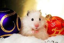 Christmas Cuteness / Cute Christmas stuff!   / by Tiffany Erika