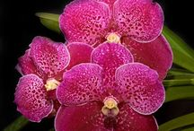 orchids / by Lucy Ioakim