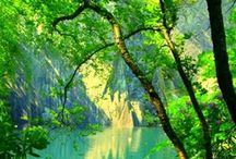 Natural Rhythms of Summer / ...Tree Leaves are Green in the Spring and the Summer.... -Weylan Tiankong / by 尊然