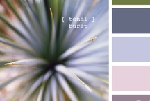 Color Combinations / by Nancy Terrell