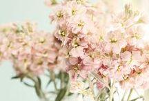 Flowers / by Nealey Dozier   Dixie Caviar