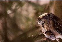 OWLS / I love owls, its an obsession / by Emma Rain