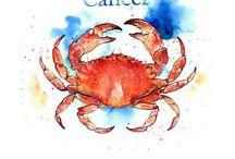 Zodiac : Cancer / by Brandy Hunter