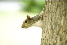 LC Squirrels / by Lynchburg College
