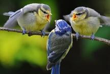 Birds / by Deborah LaTour