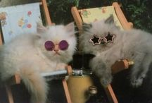 Cats! (Judge me.) / by Anna Johnson