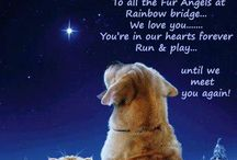Pets / by Bobbie Rutherford-Bennett