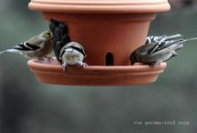 Birdfeeders and Bird Baths / by Bobbie Rutherford-Bennett