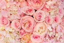 floral / by Sandra Sandoval