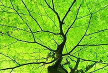 Trees / by Nancy Lewis